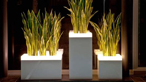 Light Planters by Illuminated Planters Illuminated Planters Illuminated