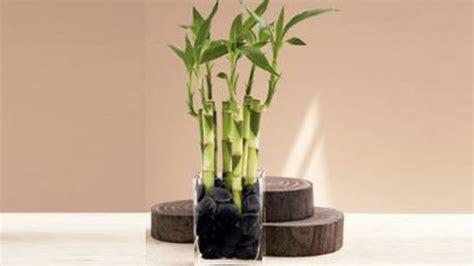 Plante Bambou Dans Salle De Bain by D 233 Corez Votre Salle De Bain Avec Une Plante De Bambou