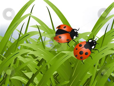insect grass clipart   cliparts  images
