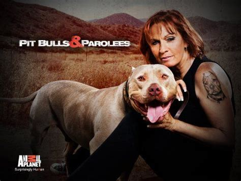 pitbulls and parolees dogs 195 best images about pit bulls and parolees on trainers and