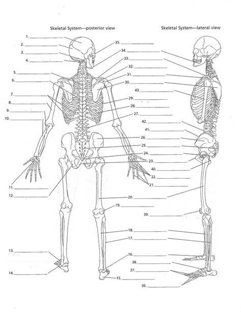 diagram of skeleton skeletal system diagram unlabeled anatomy organ