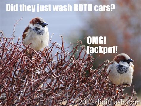 Funny Bird Memes - funny bird favouritism meme quotes