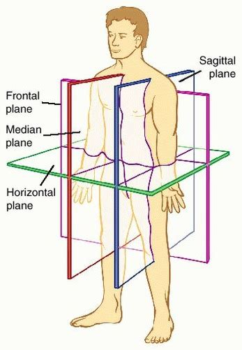 anatomical sections of the body body planes and sections flashcards quizlet