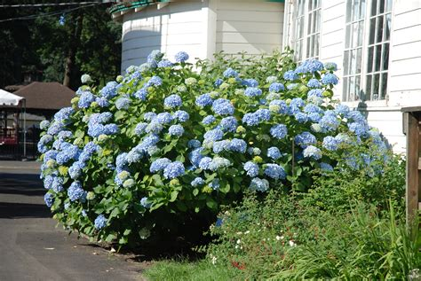 ideas types of evergreens with cool turquoise flower plus