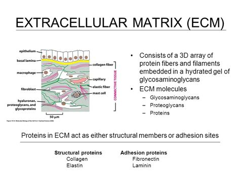 a protein consists of cell and tissue engineering nanotechnology ppt