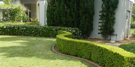 landscape management landscaping projects by bne lawn garden maintenance