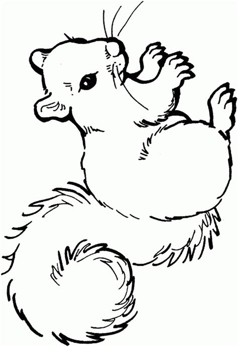 childrens coloring pages of squirrel printable squirrel coloring pages perfect for kids 38