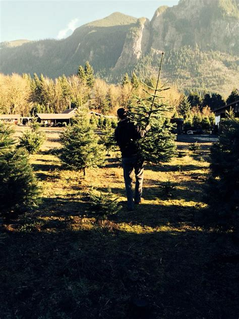 mountain creek christmas tree farm 98065 snoqualmie 6821