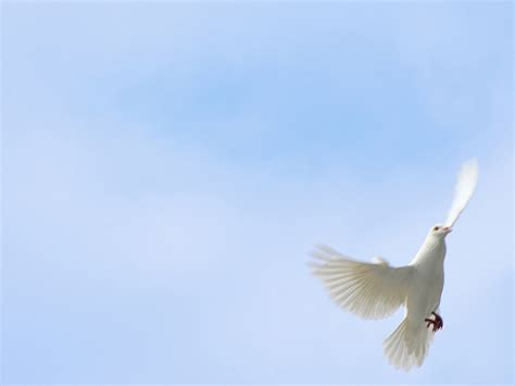 peace sign powerpoint templates blue objects free ppt white dove against blue sky white doves flying against