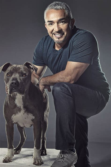 whisperer with cesar millan whisperer cesar millan sued alleged pit bull attack reporter