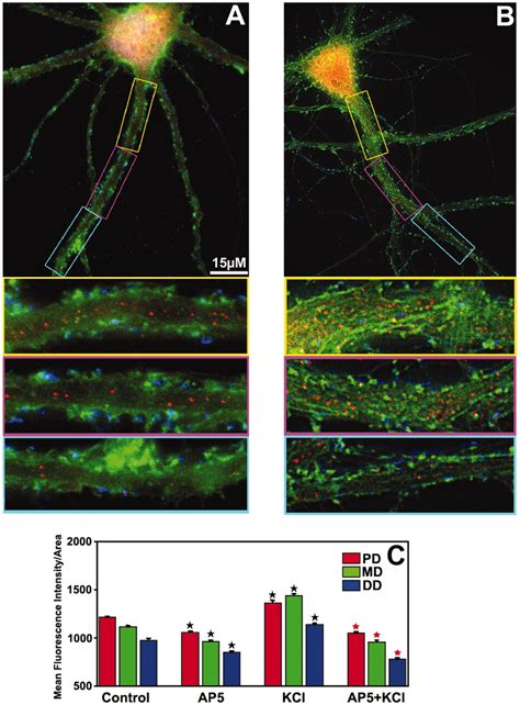New Oversize Top Green Lonely Figure Desain Sederhana Cantik 31361 Ai activity dependent trafficking and dynamic localization of zipcode binding protein 1 and 邁 actin