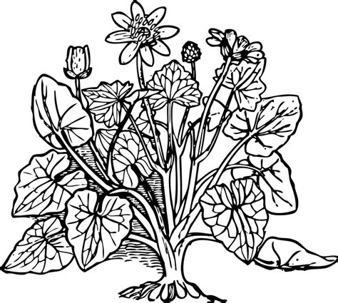 coloring pages of flowers and plants plants coloring page coloring home