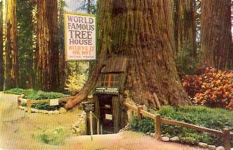 famous tree houses world famous tree house houses pinterest