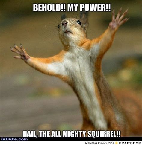 Funny Squirrel Memes - 39 very funny squirrel meme images gifs pictures picsmine