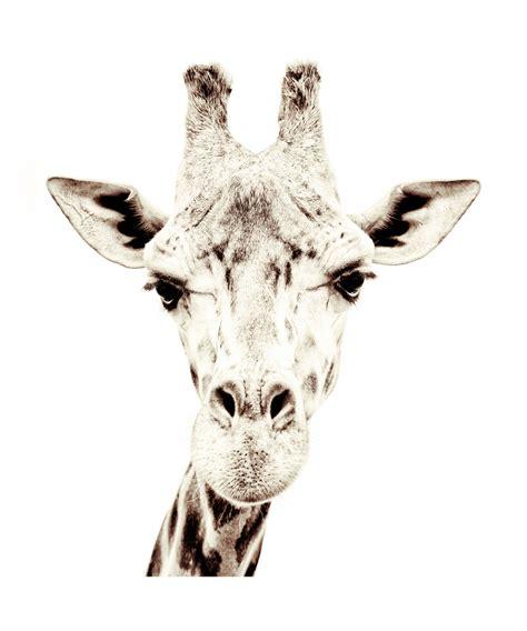 Magnetische Tapete by Magnetische Tapete Giraffe Catrin