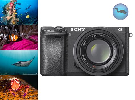 sony mirrorless review sony a6300 mirrorless review underwater photography