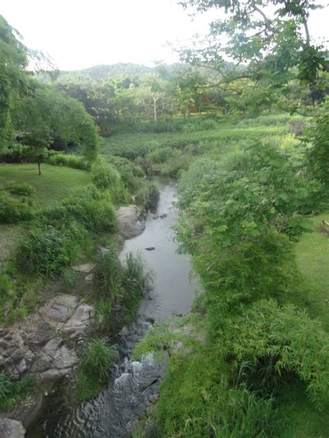 Caguas Botanical Garden Botanical Garden Caguas Places I D Like To Go Pinte