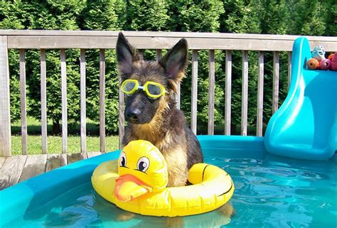 puppy pool 7 ways to make your s backyard a reality this summer dogvacay official