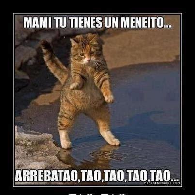 imagenes chistosos y videos gatos chistosos con frases chistosas imagui