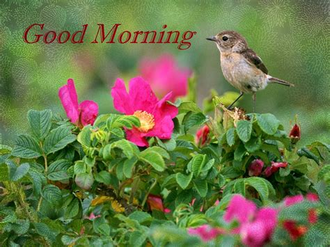 images de good morning top 85 beautiful good morning wallpapers images and photos