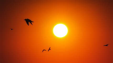 sunrise birds  wallpapers hd wallpapers id