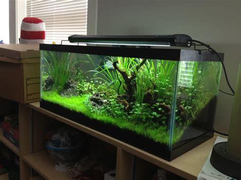 Aquarium Design Ideas by Aquarium 30 Gallon Long Aquarium Design Ideas