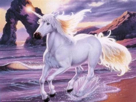 unicorn images unicorns images unicorn hd wallpaper and background photos
