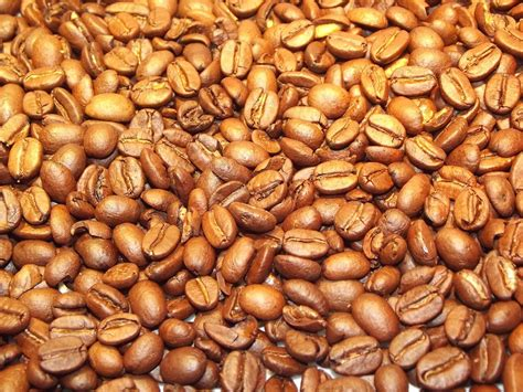 java cocoa gold free photo coffee beans coffee beans golden free