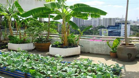Roof Top Garden Ideas Rooftop Gardening Ideas Acehighwine