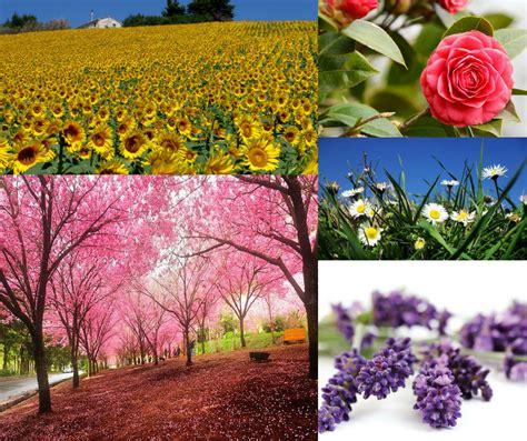 simboli fiori il significato dei fiori ogni fiore ha un proprio simbolo