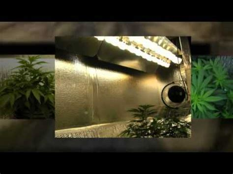 cfl grow light setup amazing cfl grow lights how to flower cannabis