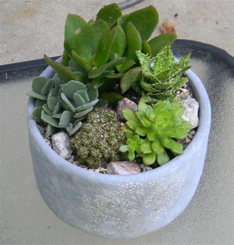 17 Best Images About Succulent Gardens On Pinterest Succulent Wall Garden For Sale