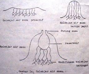 mamalia  pengertian habitat struktur klasifikasi