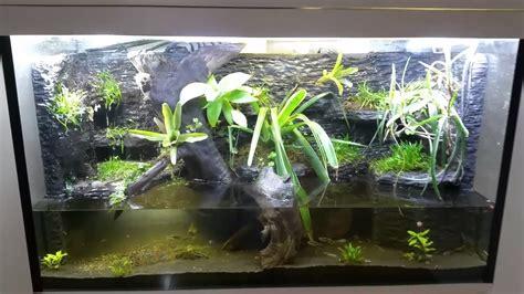 tree frog aquarium  aquarium ideas