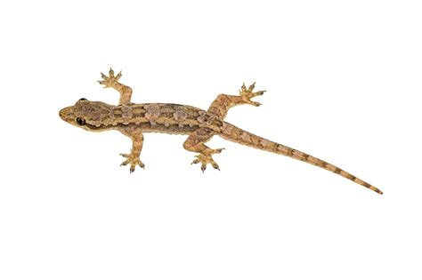 lizard images small lizard image 4247324 1240x826 all for desktop
