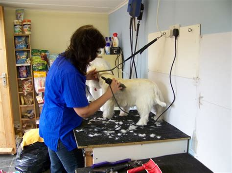 Kennel Assistant Salary by Five Veterinary Clinic To Pursue