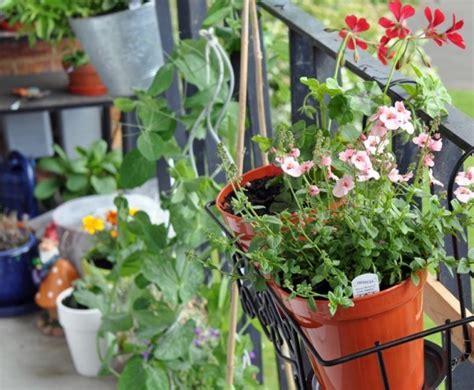 Special Edition Kebun Tanaman Mini Garden diy how to plant a personal garden in a small space