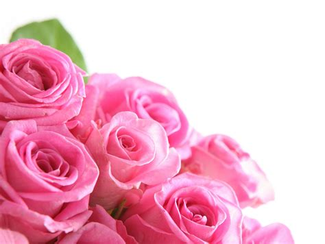 Flowers Pink pink roses pink color photo 23830810 fanpop
