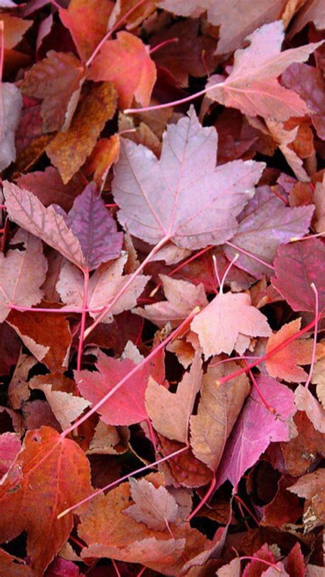 wallpaper pink leaves 2620 best iphone walls 1 images on pinterest background