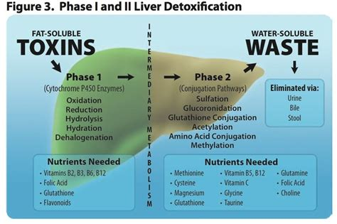 What Daily Detox Looks Like Alcoholism by Our Liver Filters Out 100s Of Toxins Everyday Bacterial
