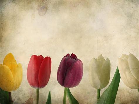 imagenes flores en hd fondos de flores para celular wallpaper hd para bajar