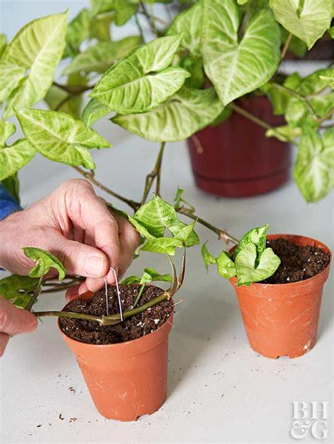 cuidados de las plantas de interior gu 237 a de cuidados de las plantas de interior