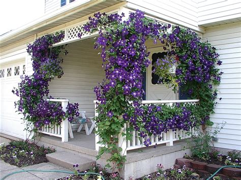 gardening on the porch pruning clematis midnight musings