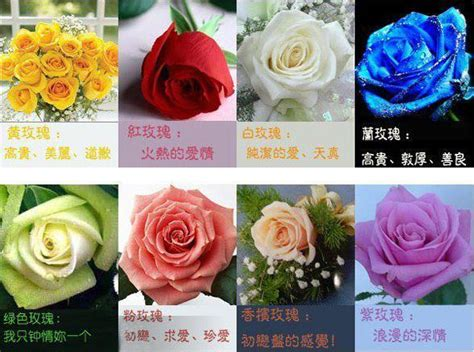 valentines day significance valentine s day what color of flower should you send