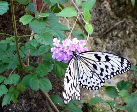 Gainesville Butterfly Garden by Outside The Butterfly Garden Picture Of Florida Museum
