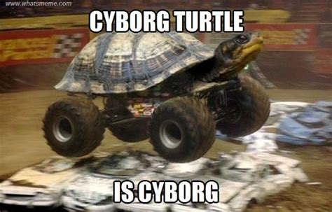 Turtle Memes - buggy turtle what s meme funny pinterest