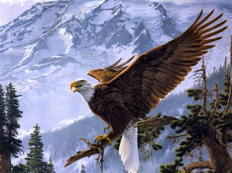 eagles background eagle hd wallpapers desktop pictures one hd wallpaper