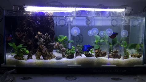 aquascape betta setup aquascape betta fish time lapse indonesia newbie