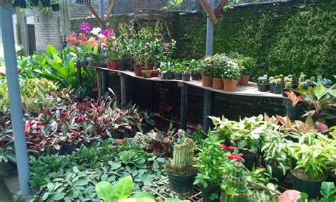 Jual Bibit Bonsai Surabaya hias jual bibit pohon tanaman