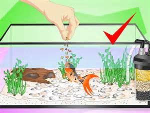 Homemade Decorations For Home how to set up a fish tank for goldfish 10 steps with